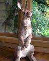 04-hare