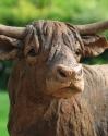 05-highland-cow